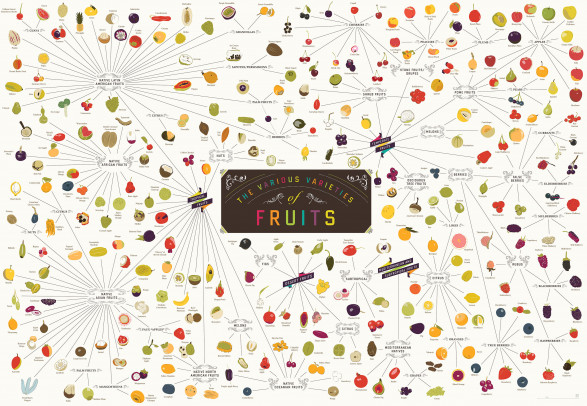 The Various Varieties of Fruits