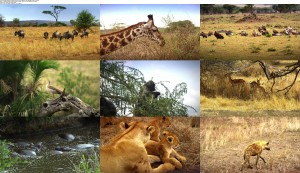 Download Subtitle indo englishSerengeti Natures Greatest Journey (2015) BluRay 720p