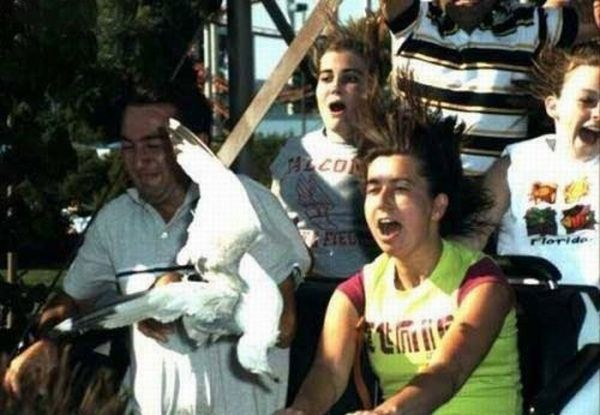 People From Roller Coasters ThumbPress 40 Winners and Losers from Roller Coasters (62 Pics)