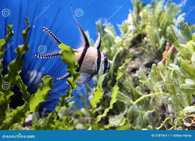 Aquarium Fish Stock Image   Image: 37879511