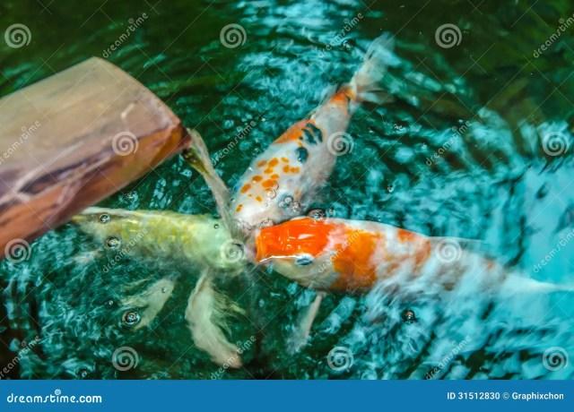 Fish Stock Photo   Image: 31512830
