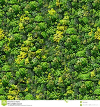 Forest Seamless Pattern - View From Above. Stock Photo - Image: 13830390