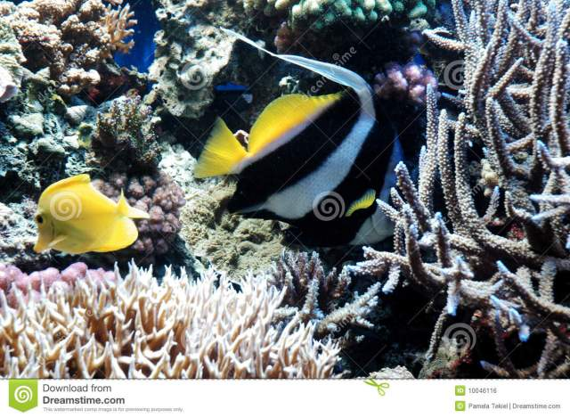 Striped Fish Royalty Free Stock Image   Image: 10046116