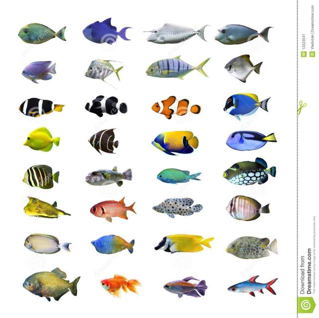 Tropical Fish Stock Image   Image: 12223541