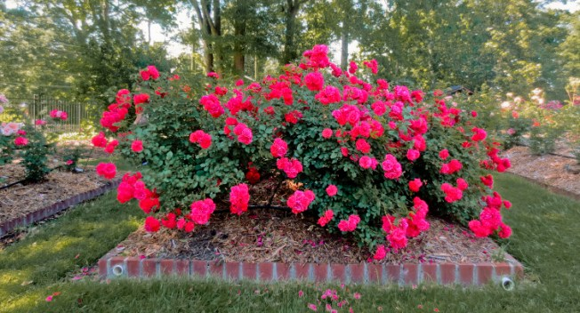 Fernbank-Rose-Staton-Garden-27a