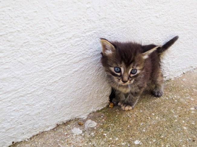 Baby stray kitten