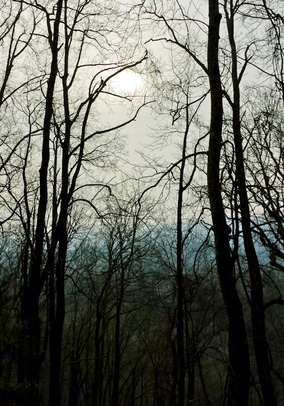 amicalola-state-park-2a