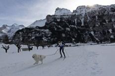 Skijöring mit Samojede. Musher: A. Nesterov (RUS)