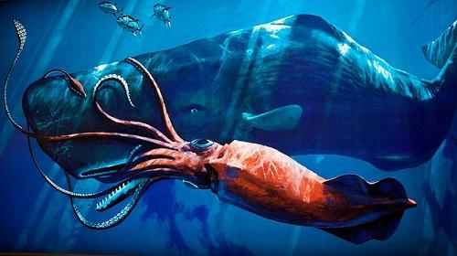 Der Pottwal jagt Riesenkalmare im Tiefenwasser.