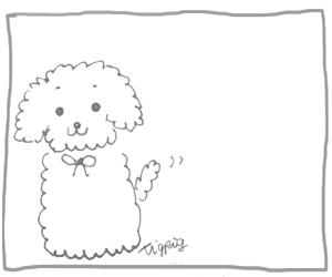 モノトーンのトイプードルの落書き風イラスト300×250pix