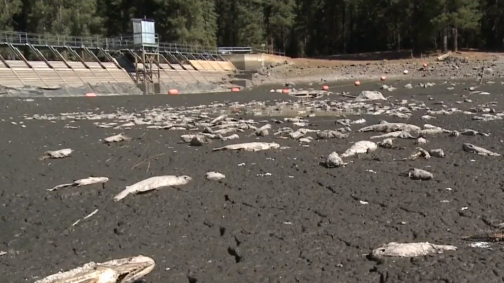 California lake runs dry overnight