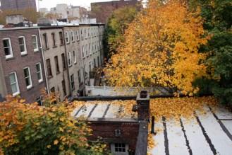 Neighbor's Rooftop 02