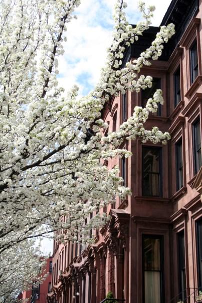 Spring on Greene st. 03