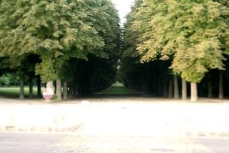 Treelined Garden