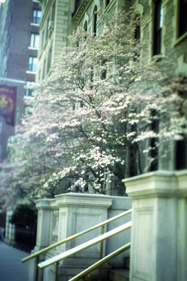 Blossoms @ Upper East Side