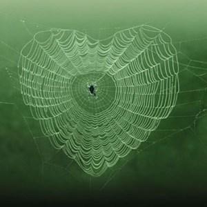 dog worldbridger heart web