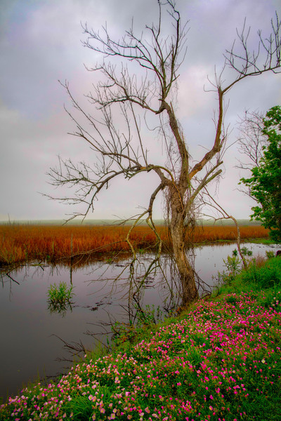 Brazos Bend State Park is a great place to visit, but you don't want to live there. It's a protected wetlands, complete with swamps, marshes and all the animals that live in them. If you go away without seeing a crocodile, then you didn't get out of the car. Photo by Tim Stanley Photography.