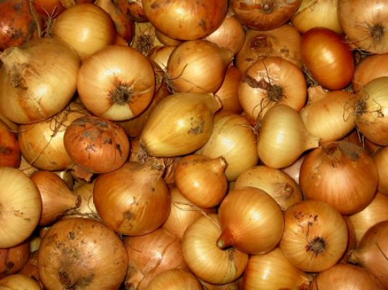 Onions for winter