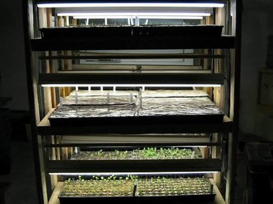 Grow racks at night