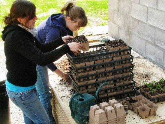 Filling peat pots