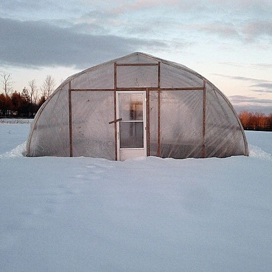 Greenhouse in snow, early March