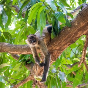 The EASIEST place to see Costa Rica Monkeys