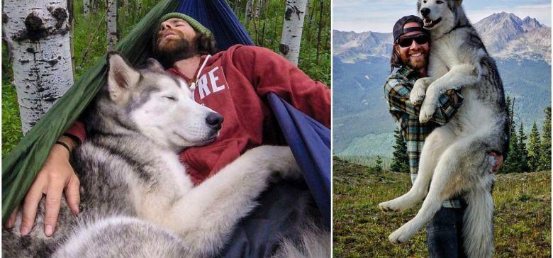 Dog Travels The World