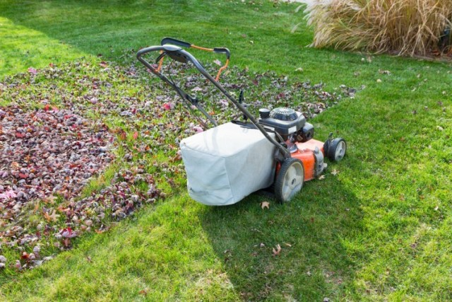 lawnmower on grass next to leaves