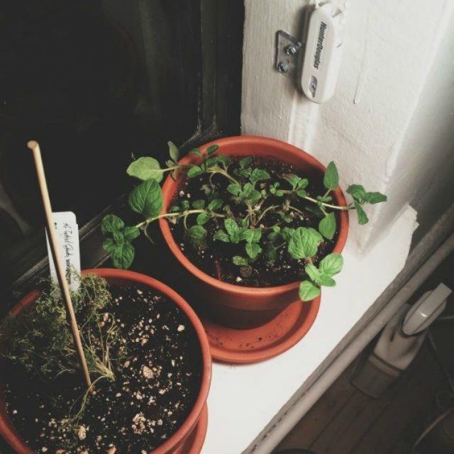 Image of plants in pots.