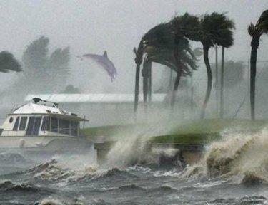 Photographer captures dolphin in hurricane winds.