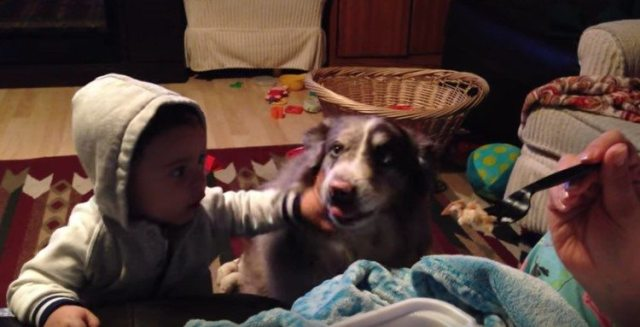 Frustrated baby pushes dog.