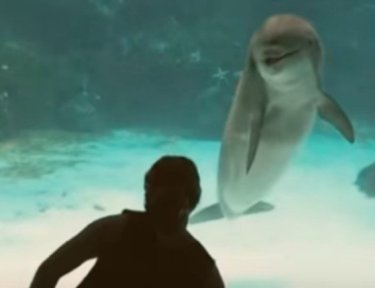 silhouette of girl standing in front of dolphin