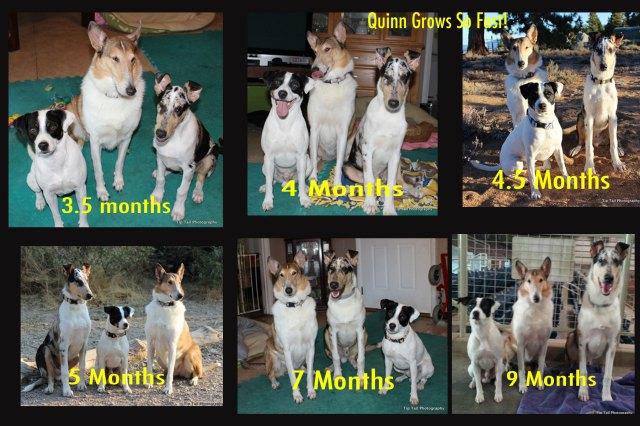 Growing Quinn