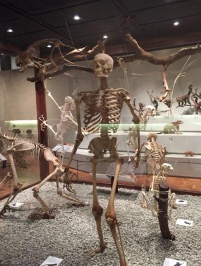 museu_zoologia_usp