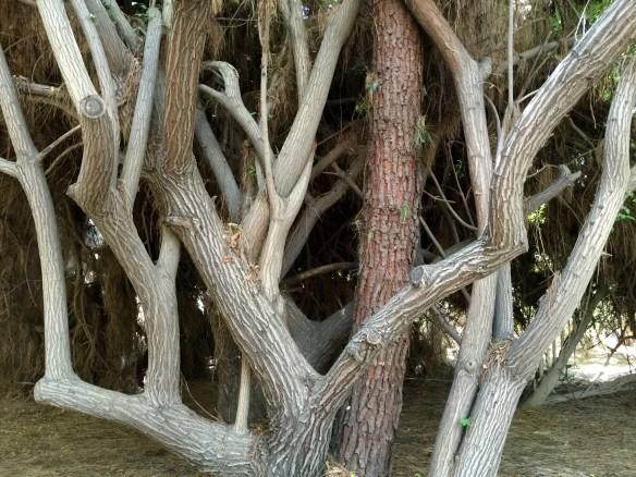 Formas dactilares de los árboles.