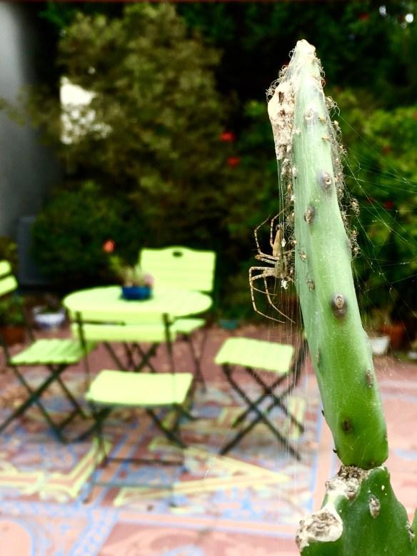 2.- Al nacer las arañas, les enseñó a juntarse para protegerse de los ramalazos del viento. Foto: José Fuentes-Salinas.
