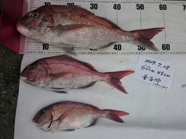 今日の釣果と入荷商品 釣果062