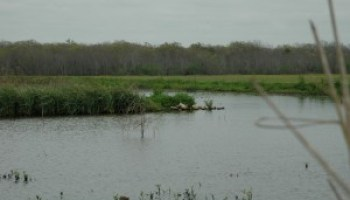 Geronimo and Alligator Creeks Watershed Partnership meeting set for Feb. 8 in Seguin