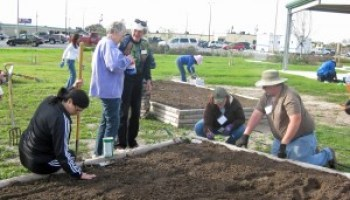 Applications being accepted for 2015 Bexar County Master Gardener intern training