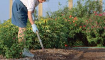 Series of spring gardening, landscaping seminars set for San Antonio