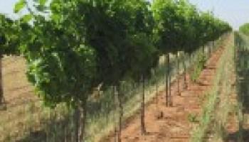 Prospective grape grower workshop slated for Nov. 9 in Llano