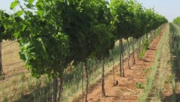 July 20 workshop to address 'grape expectations'