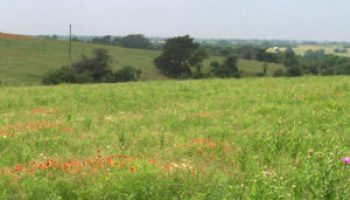 AgriLife Research: Multi-paddock grazing is superior to continuous grazing