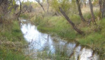 Riparian and stream ecosystem workshop set for March 29 in Edna