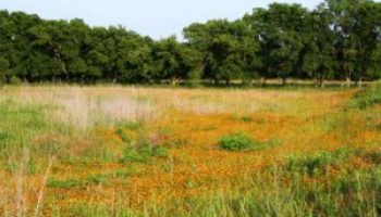 AgriLife Extension land steward programs to focus on Trinity River Basin