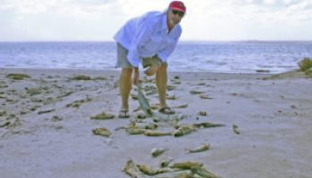 Fish kills trigger red tide alerts, first responders