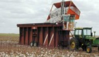 Multi-County Cotton Workshop slated for Feb. 2 in Uvalde