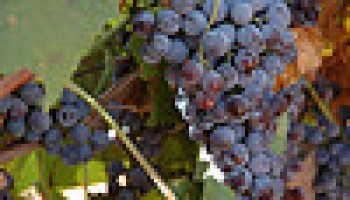 Pittsburg site of February 7 prospective wine-grape grower workshop
