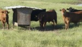 May 4 program in San Antonio will address rebuilding a beef-cattle herd