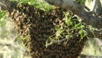 AgriLife Extension's Bexar County office 'abuzz' May 18 with Beekeeping Basics